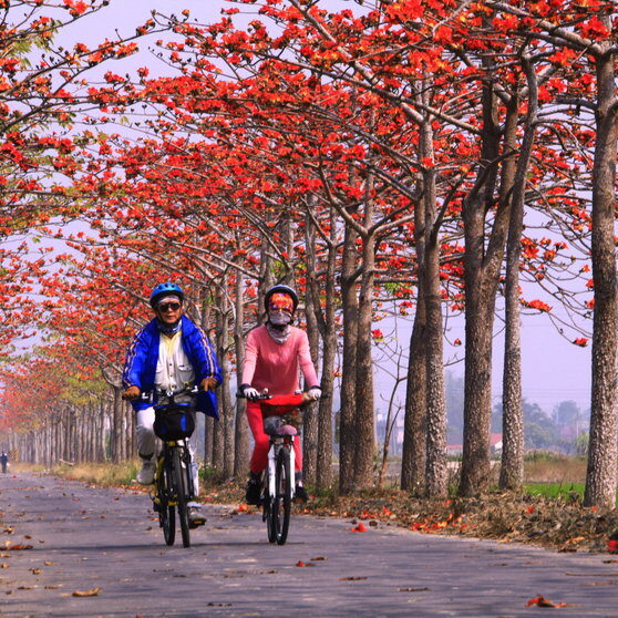 Cycling+on+the+Baihe+Cotton+Tree+Path,+Tainan